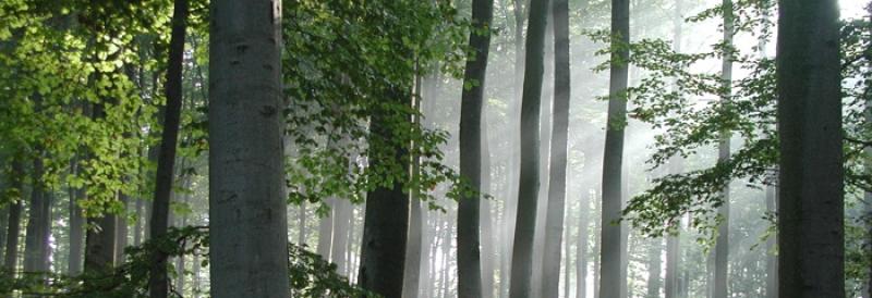 Massage Waldwellness